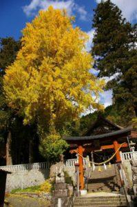 長尾神社の銀杏_171111