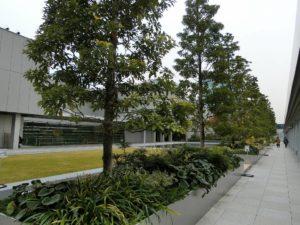 GINZA SIX ガーデン_3_171208
