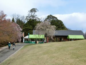 桜まつり_2_180408