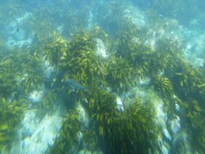 あまんぼうから見る魚_2_180714