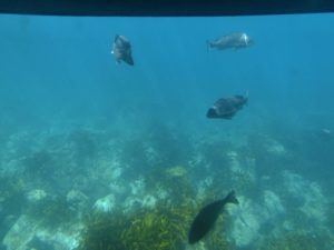 あまんぼうから見る魚_1_180714