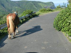 道路で避けてくれる馬_180716