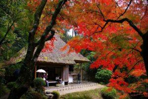 2015年に撮影した吉水園の紅葉