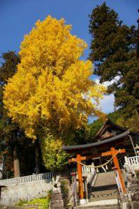 長尾神社と銀杏の木_181110
