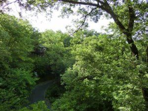 きすき健康の森バンガローの朝_2_190519